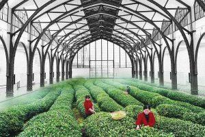 tea field in museum