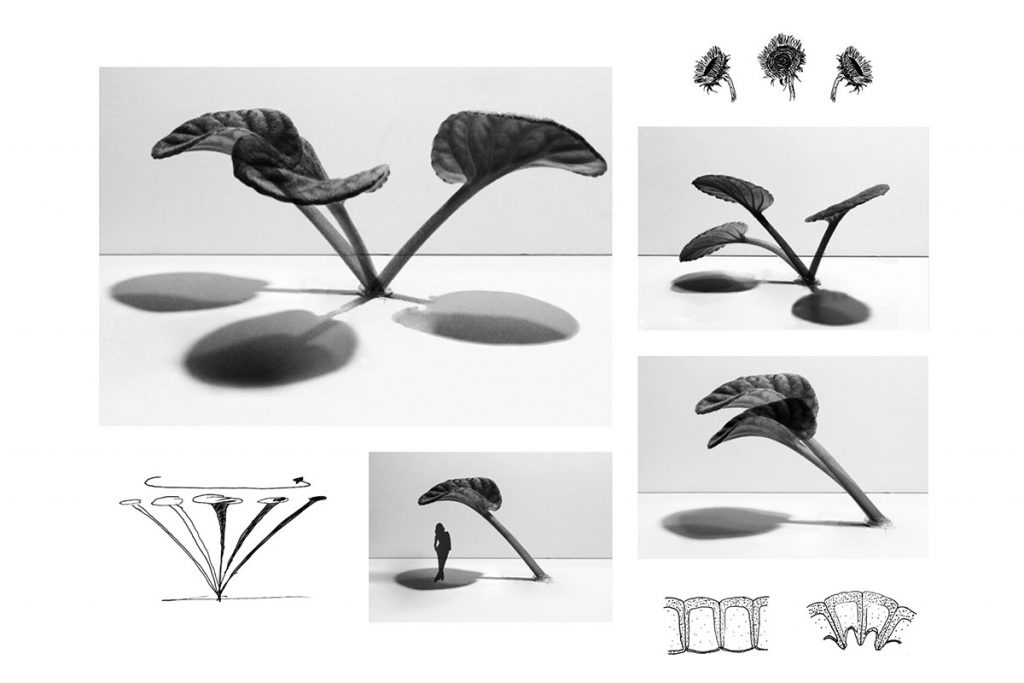 plant movement study